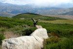 Cabra hispánica Gredos